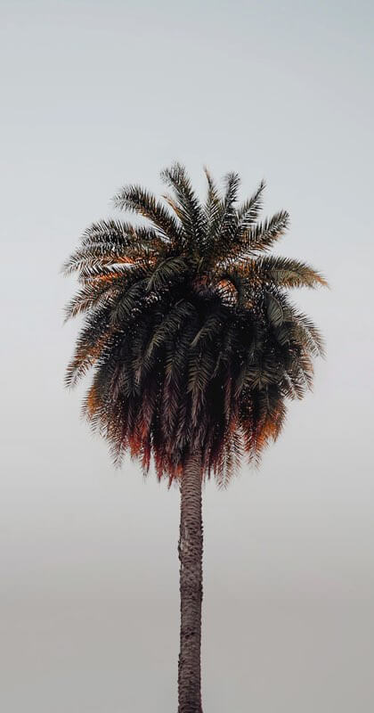 A perfectly places palm tree set on a cool grey backdrop