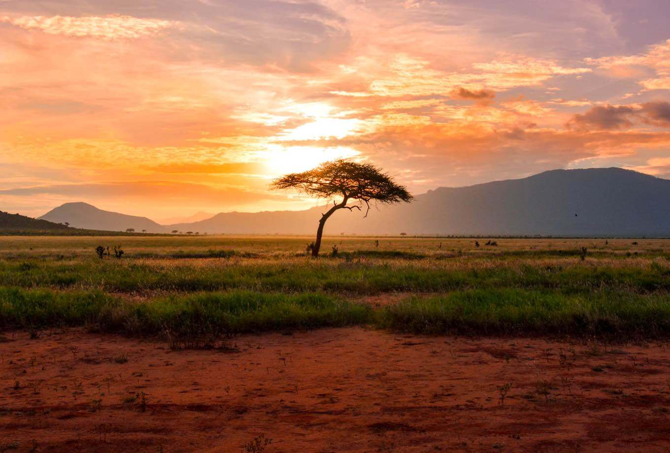 Sunset hitting an African tree in the middle of a deserted field