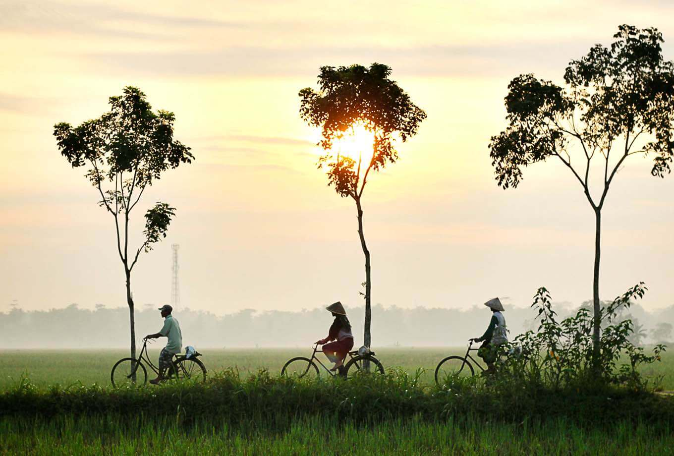 Three villagers riding bikes through a green ricefield